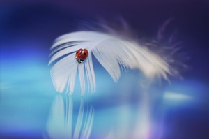 Large ladybird pobble 365