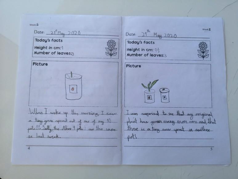 Axel's seed diary